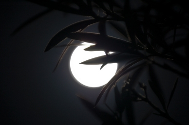 January 10th, 2009 The Moon